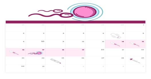 Dias Fertiles Mujer Calendario.Fecha Ovulacion Como Se Calcula El Periodo Fertil De La Mujer